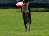 frisbee18