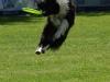 frisbee29