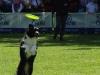 frisbee32